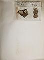 Lichenes Helvetici pars altera 009.jpg