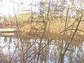 Lilienthalpark - Karpfenteich (Carp Pond) - geo.hlipp.de - 30829.jpg