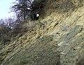 Limestone Strata, Dudley, Worcestershire - geograph.org.uk - 637001.jpg