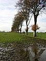Line Of Trees Near Leaburn - geograph.org.uk - 281949.jpg