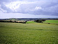 Linseed field, South Downs Way 1.jpg