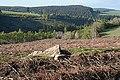 Lochpark Wood - geograph.org.uk - 422299.jpg