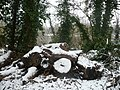 Log pile between the footpath and a pond - geograph.org.uk - 1144240.jpg