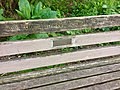 Long shot of the bench (OpenBenches 5556-1).jpg