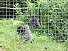 Looe Monkey Sanctuary - geograph.org.uk - 54998.jpg