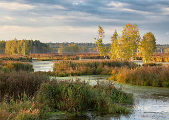 Losiny Ostrov National Park - Upper Yauza Swamps, the city of Balashikha