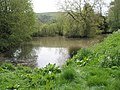 Lovely pond just past East Harting - geograph.org.uk - 795345.jpg