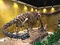 Lufengosaurus mount at Geological Museum of China.jpg