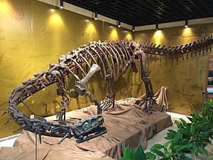 Geological Museum of China - A Lufengosaurus mounted in the museum.