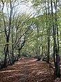 Lumberpit Lane - geograph.org.uk - 1530125.jpg