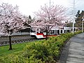 MAX Hillsboro 185th station in bloom.JPG