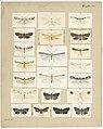 MA I437901 TePapa Plate-XL-The-butterflies full.jpg