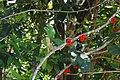 MG-naturpark-chamael-03.jpg