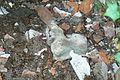 MOs810, WG 2014 48, powiat obornicki (Welna, ev. cemetery, human bone).JPG