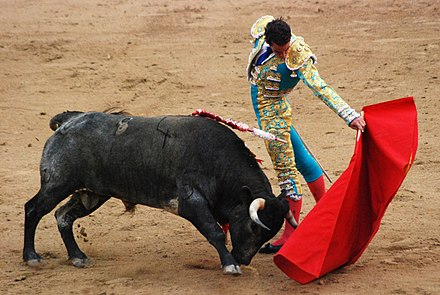 Bulls, like dogs and many other animals, have dichromacy, which means they cannot distinguish the color red. They charge the matador's cape because of its motion, not its color. Madrid Bullfight.JPG