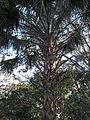 Magnolia Plantation and Gardens - Charleston, South Carolina (8556496050).jpg
