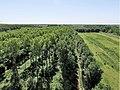 Mallebos een natuurgebied met veel bossen bij Spijkenisse.jpg