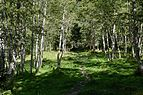 Mallnitz Seebachtal Naturlehrweg Waldpfad 03.jpg