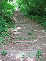 Many, many, many steps to Dunstall Woods - geograph.org.uk - 1315073.jpg