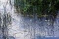 Maria Laach Abbey, Andernach 2015 - DSC07543 Mofetten, Laacher See (19954340092).jpg