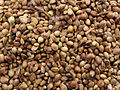 Marijuana seeds.jpg