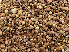 240px-Marijuana_seeds.jpg