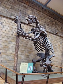 Megatherium americanum.001 - Natural History Museum of London.JPG