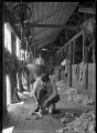 Men shearing in the woolshed on the Mendip Hills sheep farm. ATLIB 284087.png