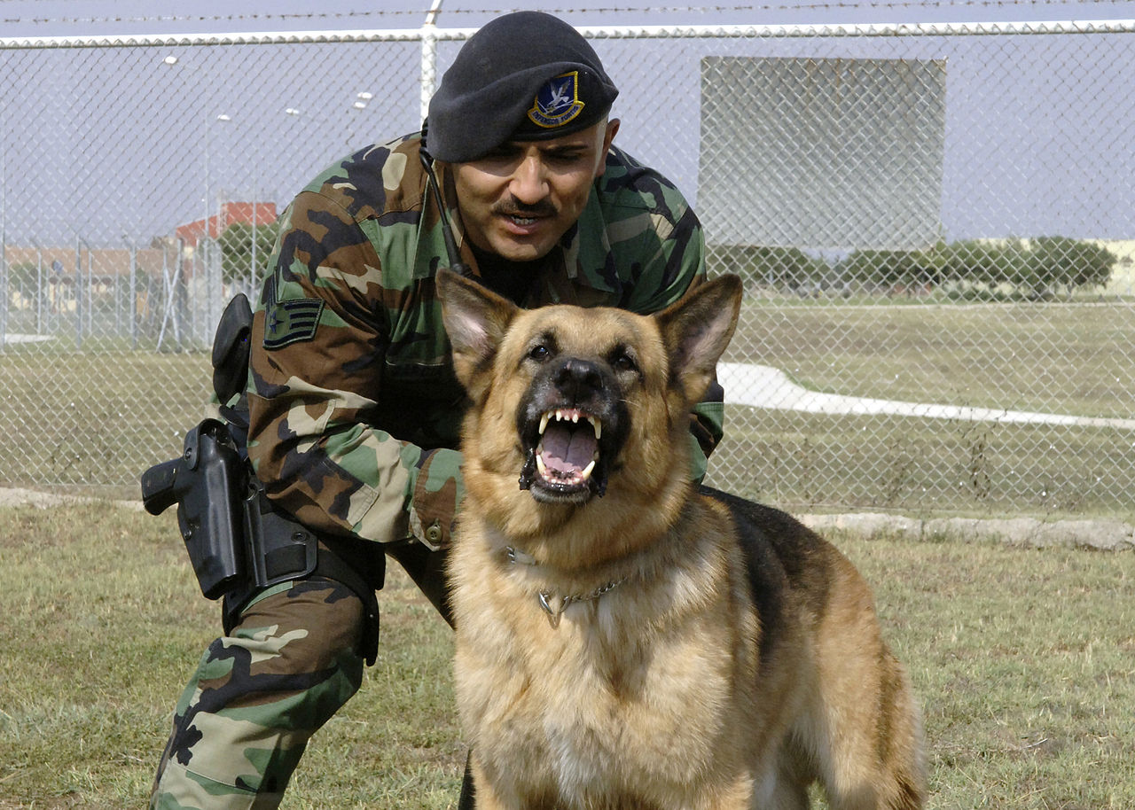 File Military Dog And Handler Jpg Wikimedia Commons