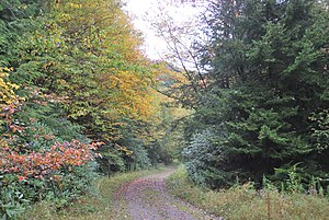 Otter Creek Wilderness - Otter Creek Trail (shown near Condon Run trailhead) runs the length of the Wilderness.