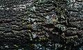 Mossy Tree Bark Texture DTXR-WD-BK-1.jpg