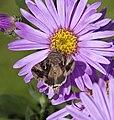 Moth (3916445098).jpg