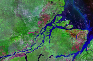 300px Mouths of amazon geocover 1990 How did Freshwater Creatures survive the Flood? Part 1