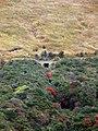 Mt. Aso Area - panoramio.jpg