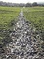 Muddy footpath - geograph.org.uk - 1127208.jpg
