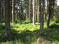Multerberské rašeliniště (007).jpg