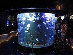 Musée océano Monaco 058.jpg