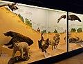 Musée zoologique de Strasbourg-100 ans de bouleversements en Alsace.jpg