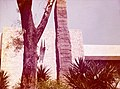 Museo Nacional de Antropología, Mexico DF, Marzo 1974 - Quirigua Stela Replica.jpg