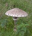 Mushroom (5018222682).jpg