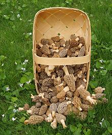 Recolección de hongos - Wikipedia, la enciclopedia libre