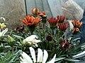 My beautiful flowers.JPG