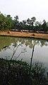 My village home nature.jpg
