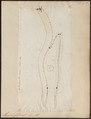 Myxine glutinosa - 1700-1880 - Print - Iconographia Zoologica - Special Collections University of Amsterdam - UBA01 IZ14300029.tif