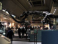NMNH Hall of Dinosaurs.jpg