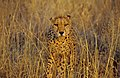 Namibia. mazzaliarmadi.it wildlife (2692573088).jpg