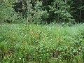 Nature Trail - panoramio.jpg