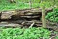 Naturschutzgebiet Chemnitzaue bei Draisdorf 6.jpg