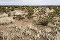 Near Berrenda Creek - Flickr - aspidoscelis (4).jpg