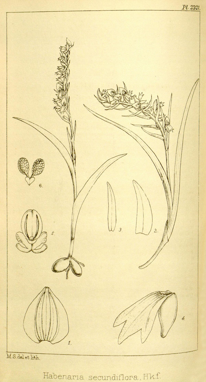 Kukuczka – Wikipedia, wolna encyklopedia